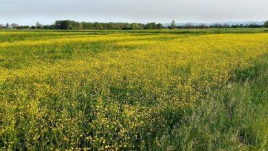 """Photo of L'assessorato all'ambiente ora si allarga alle """"politiche agro-ambientali"""""""