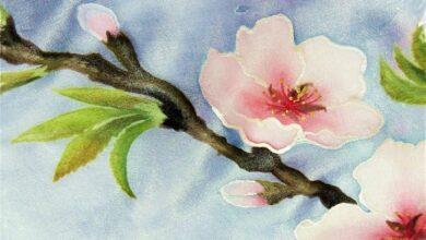 Photo of Un albero di mandorlo al Calvino, simbolo di crescita e di vita