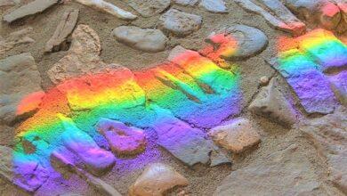 Photo of Giornata internazionale contro l'omotransfobia: le parole del Presidente Mattarella